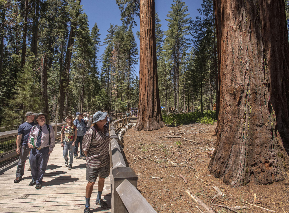Visitors experience the new boardwalk at Mariposa Grove / PHoto by Al Golub Photography via  Yosemite Conservancy