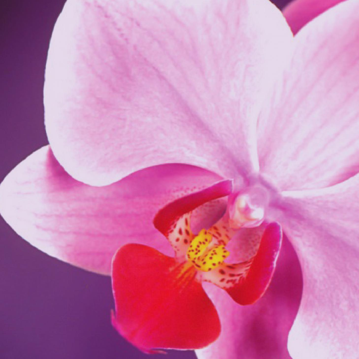 OrchidFlower-01.jpg