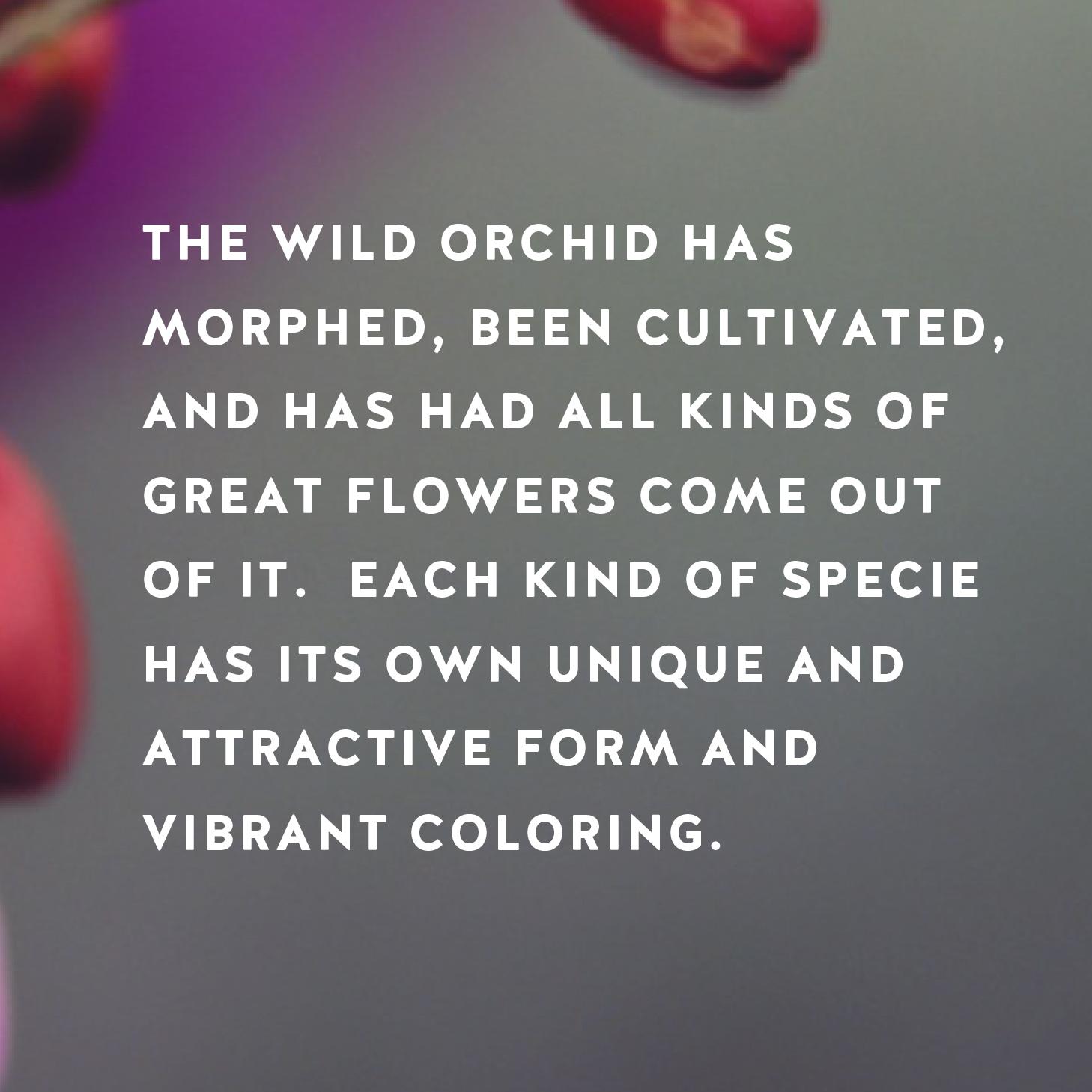 OrchidFlower-03.jpg