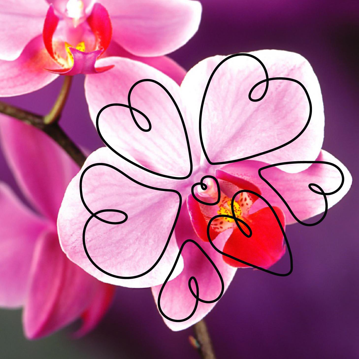 Orchid-01.jpg