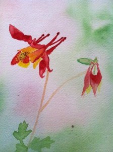 Columbine watercolor by Jennifer Radtke