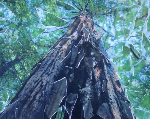 Kaleidoscope Tree ,  Photo with   Collage of Photos