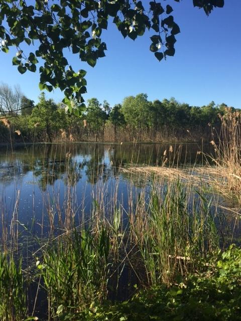 Wild Water Sanctuary
