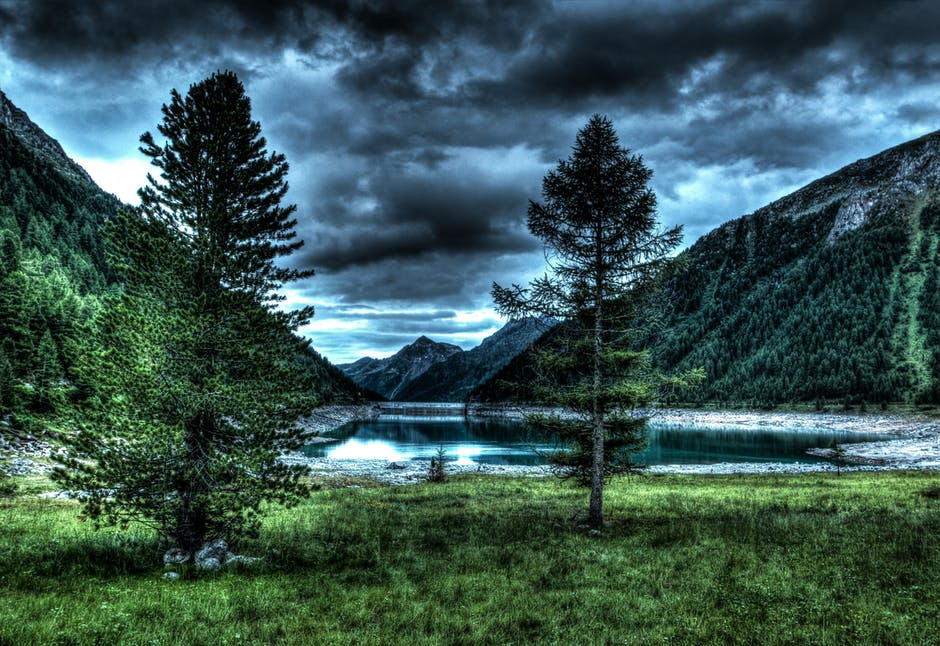 forest mountain.jpeg