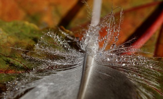 water feather fall.jpg