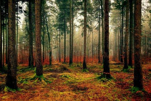 Trees forest.jpg