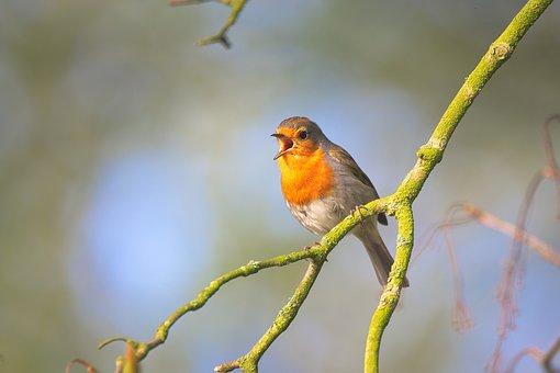 singing+bird.jpg