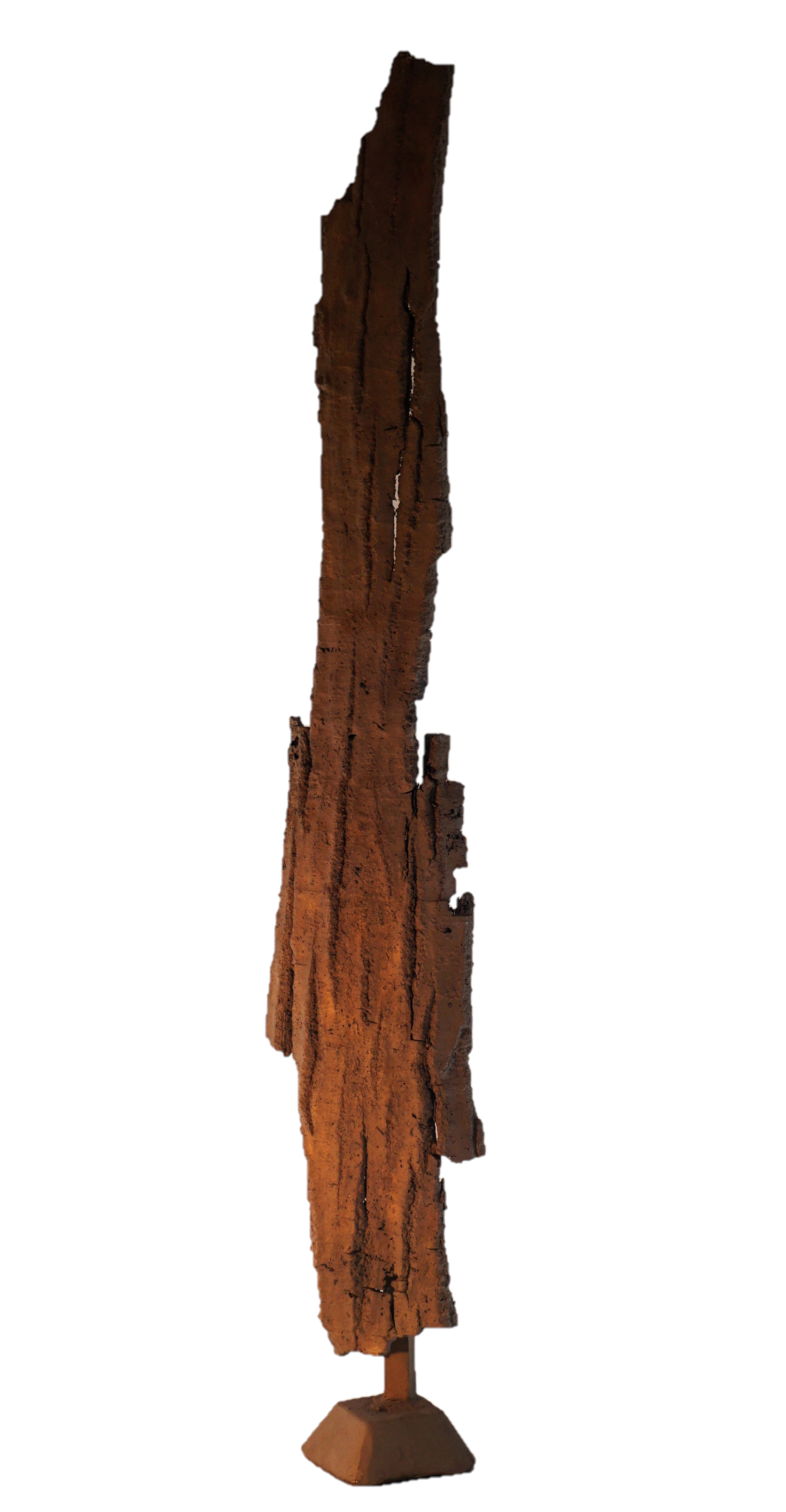 Bark #19