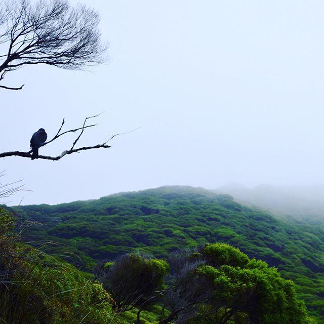 Kapiti Island, a bird sanctuary, at dawn #NZFieldwork
