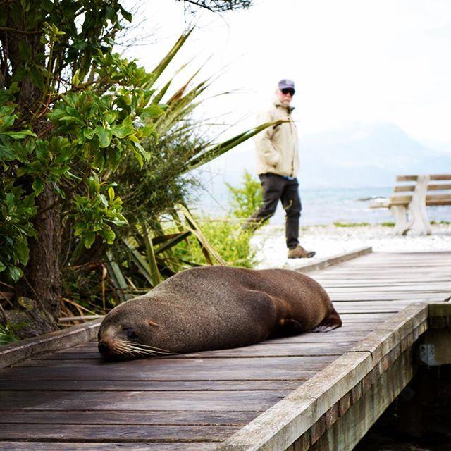 Power nap. All day, everyday #NZFieldwork