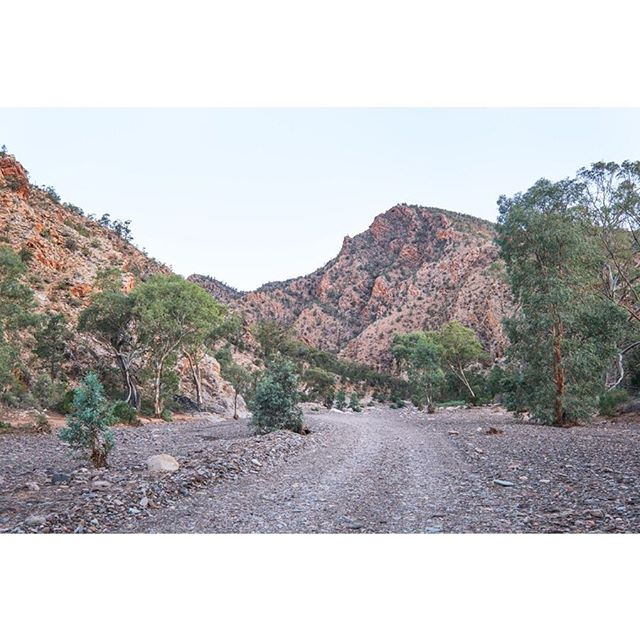 Flinders Ranges, South Australia. A prehistoric valley with dried out gorges. • • • • • #landscape_lovers #southaustralia #landscapephotography #somewheremagazine #landscape_captures #ifyouleave #oftheafternoon #subjectivelyobjective #EarthVisuals #beautifulplaces #rentalmag #paperjournalmag #noicemag #archivecollectivemag #onbooooooom #verybusymag #phornography #broadmag #lekkerzine #landscapelovers #thisveryinstant #fineartphotography #fdicct #fineart #insidesouthaustralia #seeaustralia #exploringaustralia