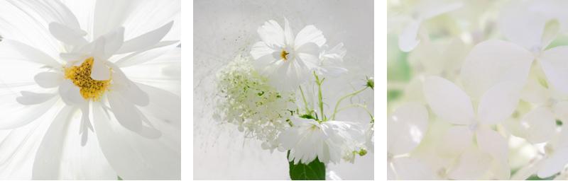 best flower hashtags