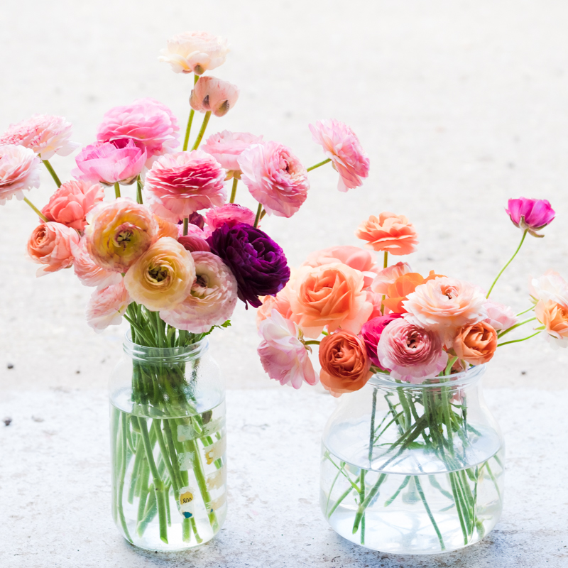 how many ranunculus.jpg
