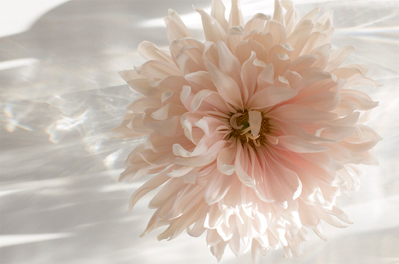 This chrysanthemum was taken on 16 November last year. There were tiny amounts of natural daylight. This photo had +2.5 stops of exposure compensation. Without the over exposure, the light looked like this: