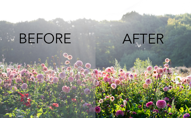stop sunflare before and after social.jpg