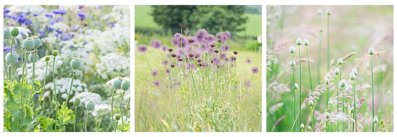 June flowers 4.jpg