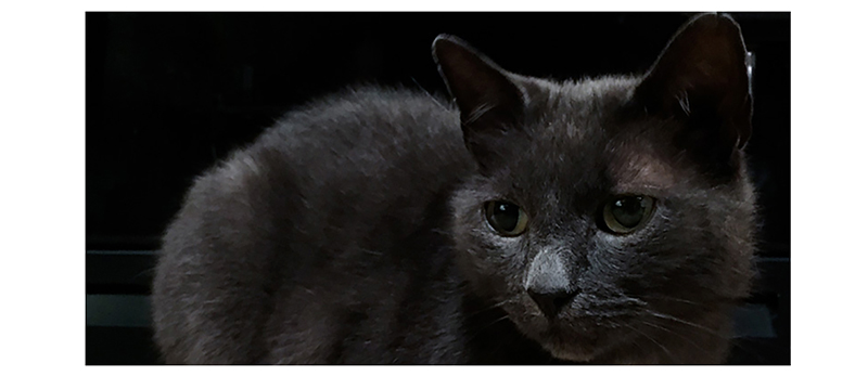 grey cat dark.png