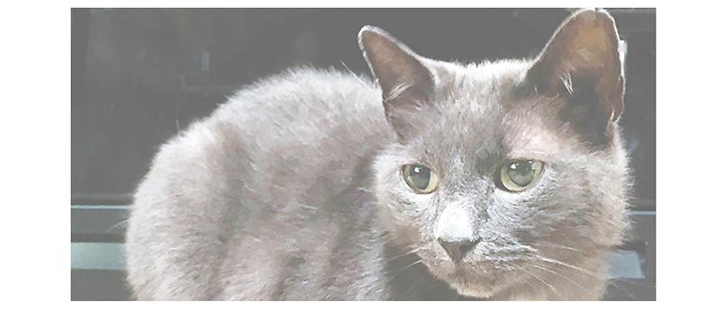grey cat light.png