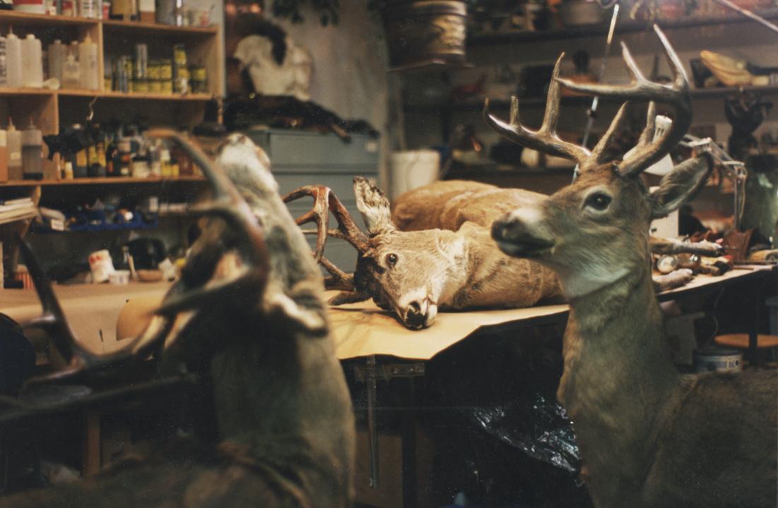 Group of animatronic deer