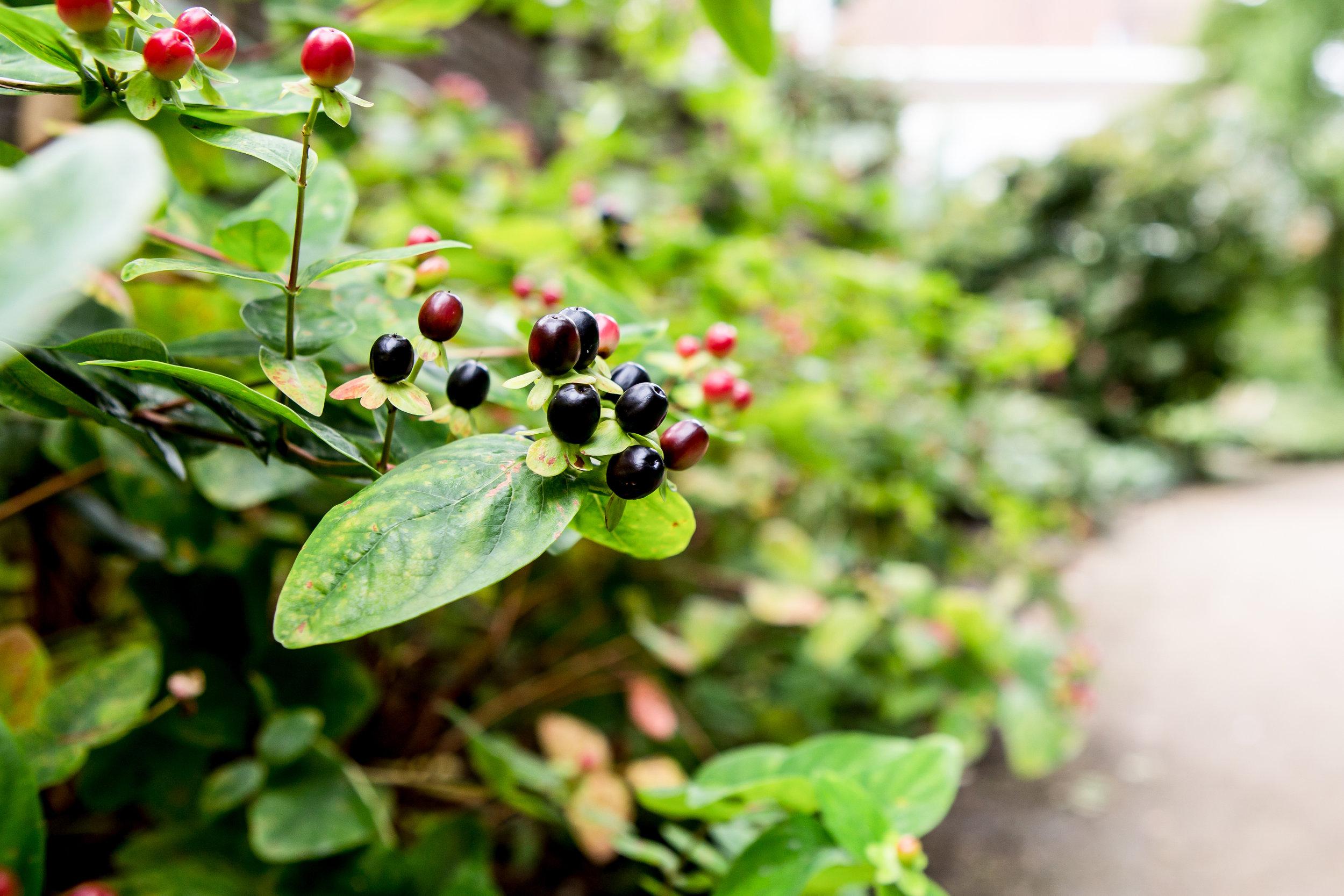 Lize Kraan | Oude Hortus zomer 3.jpg