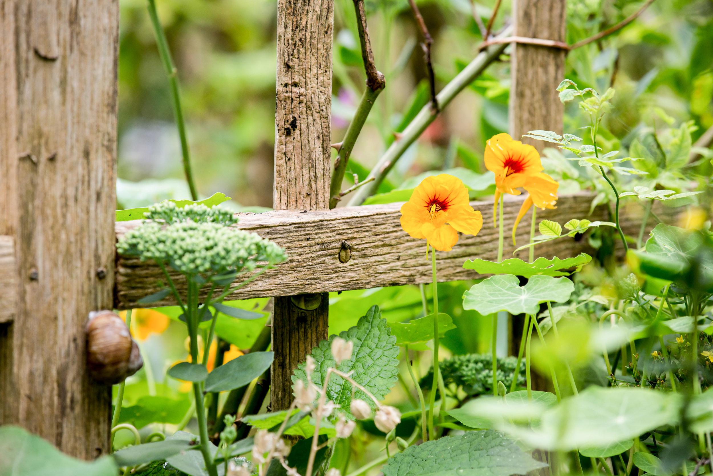 Lize Kraan | Oude Hortus zomer 4.jpg