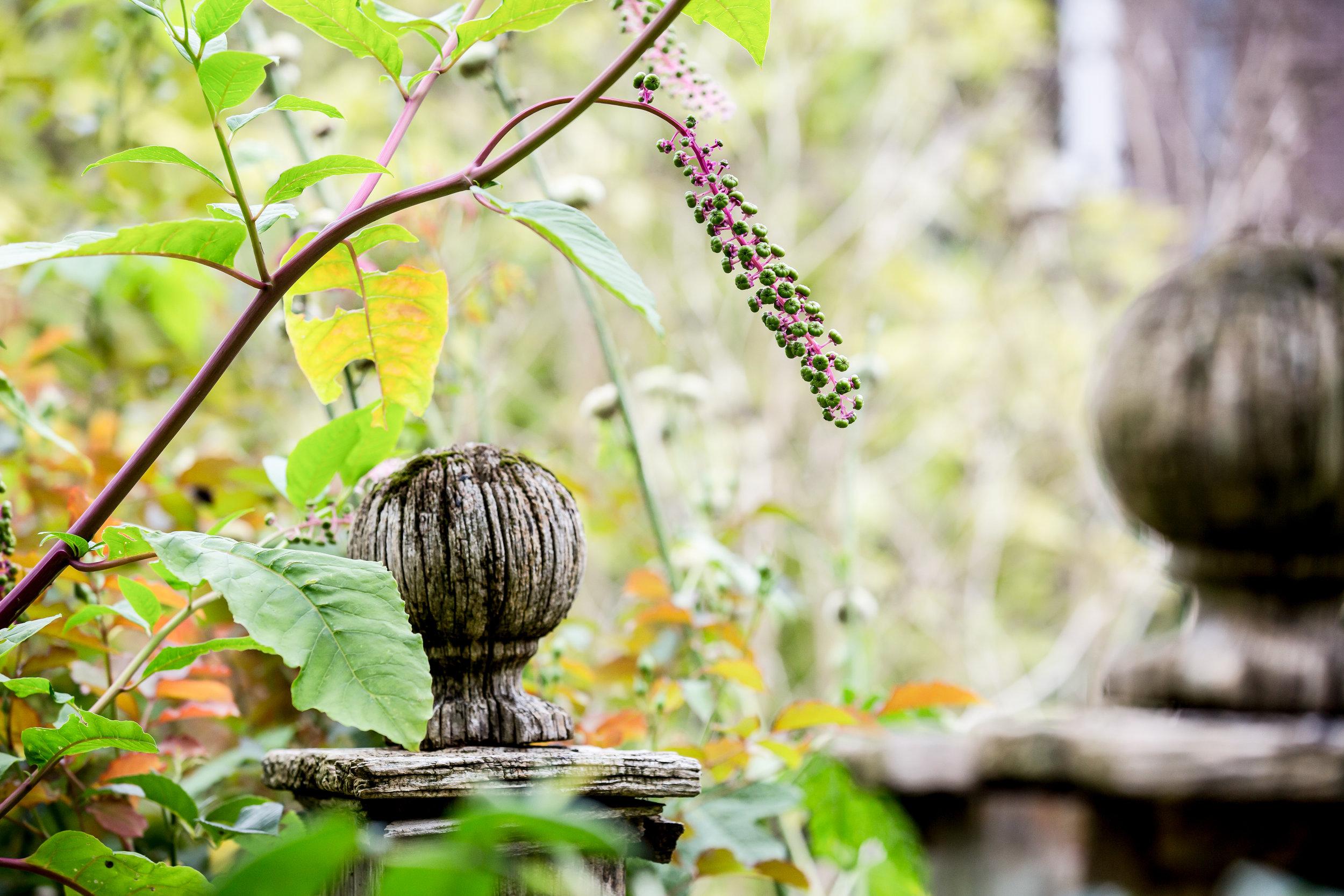 Lize Kraan | Oude Hortus zomer 6.jpg