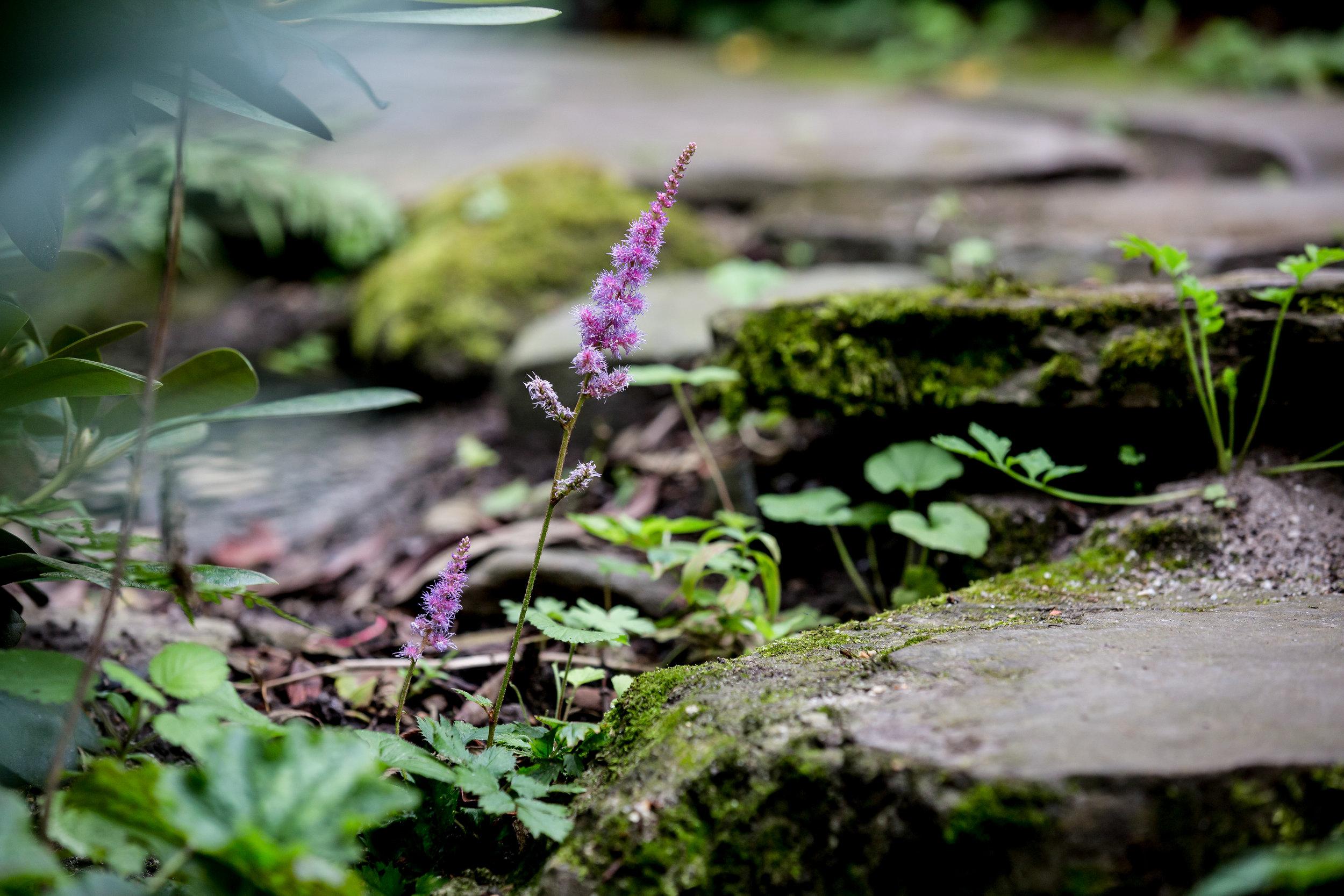 Lize Kraan | Oude Hortus zomer 7.jpg