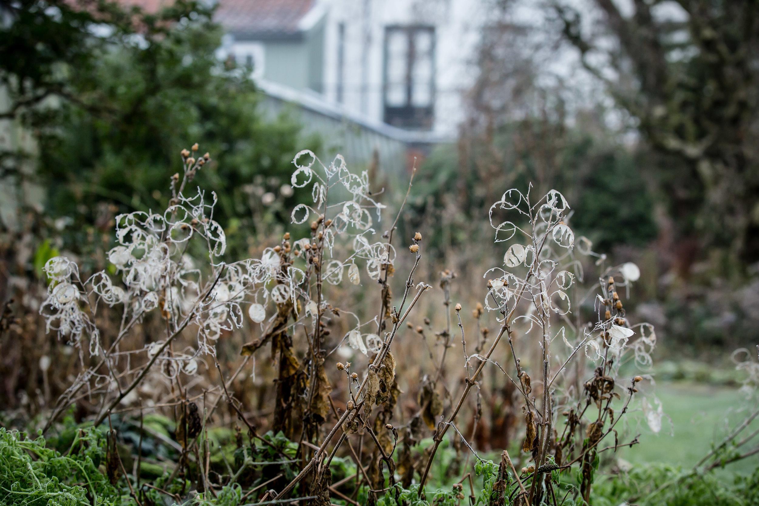 Lize Kraan | Oude Hortus winter 9.jpg
