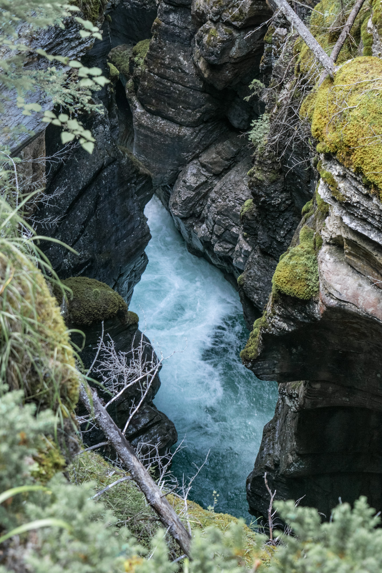 Maligne Canyon in Jasper National Park.