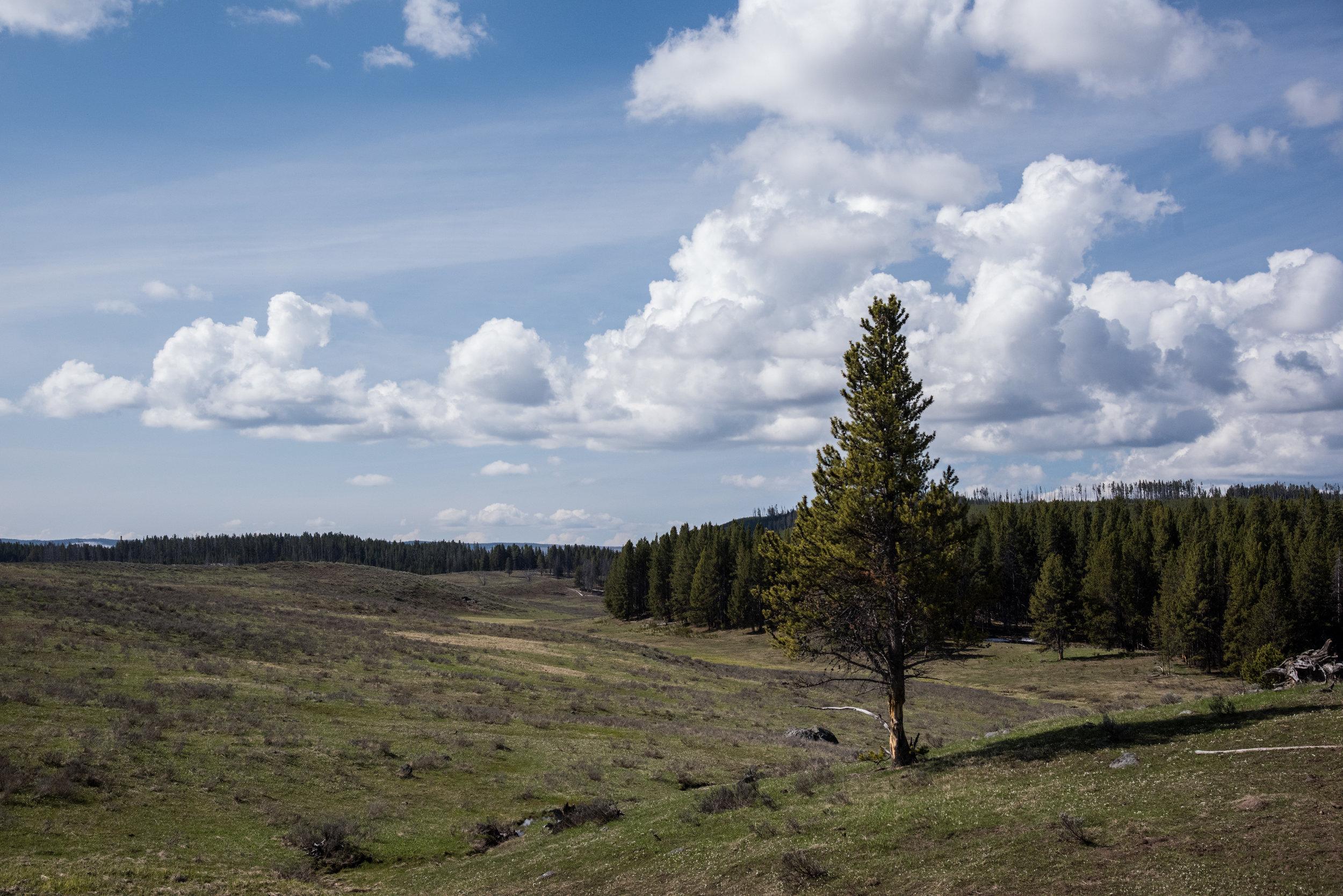 Wapiti Lake Trail in Yellowstone National Park