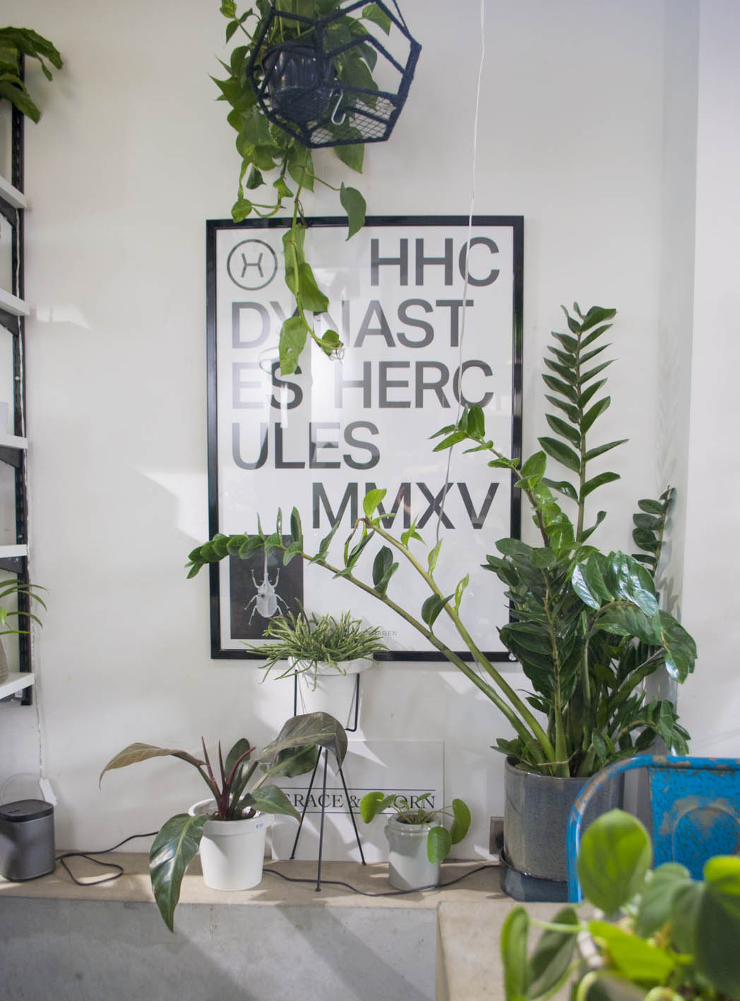 Get some green in your space - just some simple houseplants can be striking