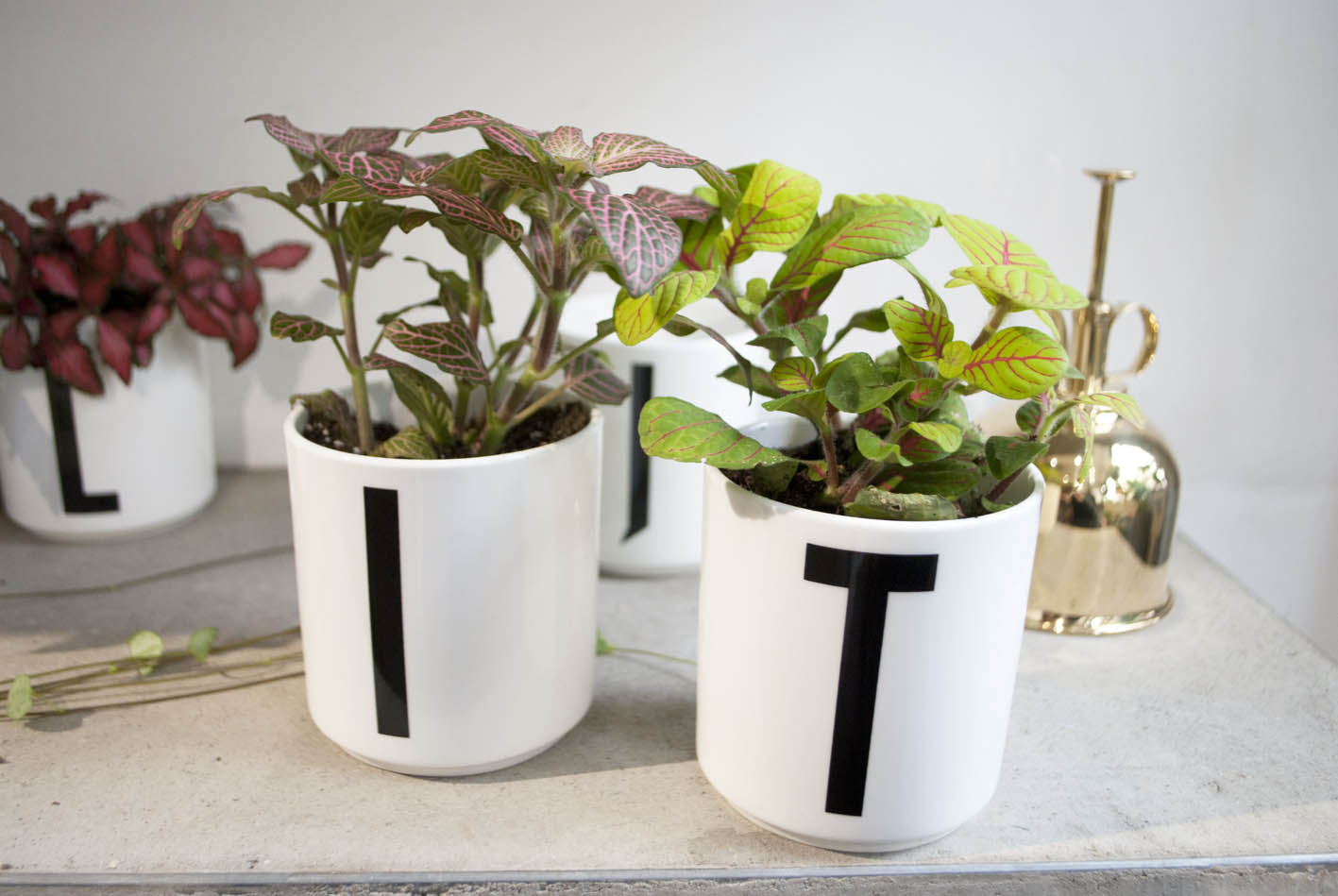 They hold a wide selection of cool pots in the Hackney shop