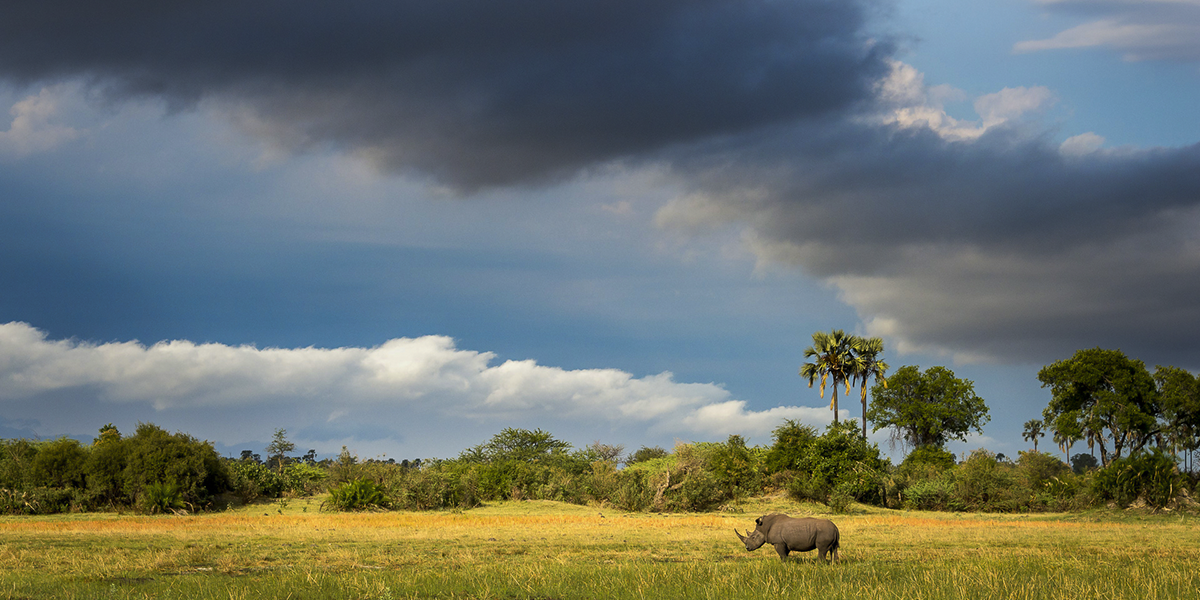 Giving rhinos a future in Botswana