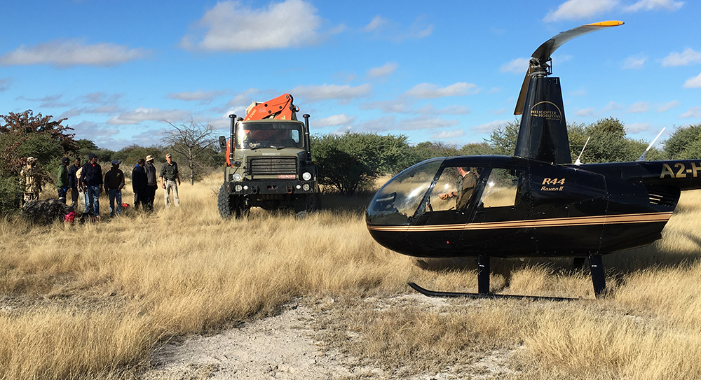 Our friends Helicopter Horizons help us with the rhino capture operation.