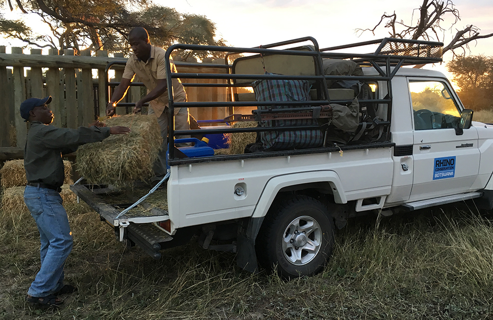 The team offload bales of lucerne to feed the rhinos and keep them in good condition during their time in the bomas.