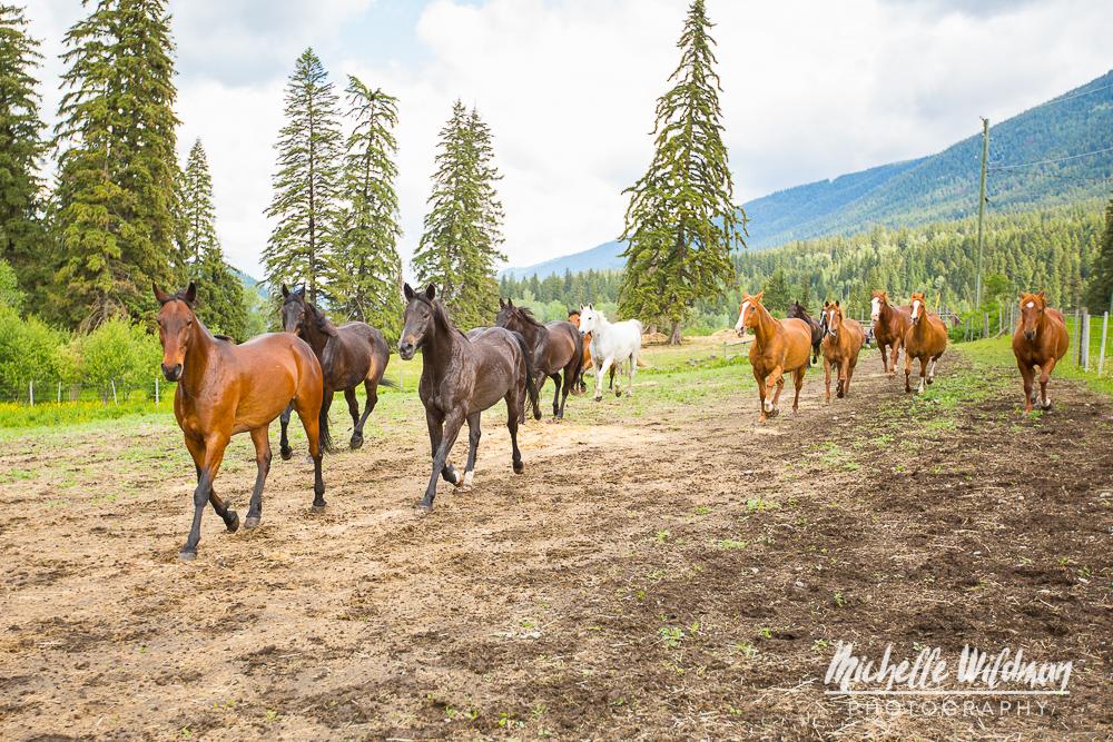 Horses - Social Media-05.jpg
