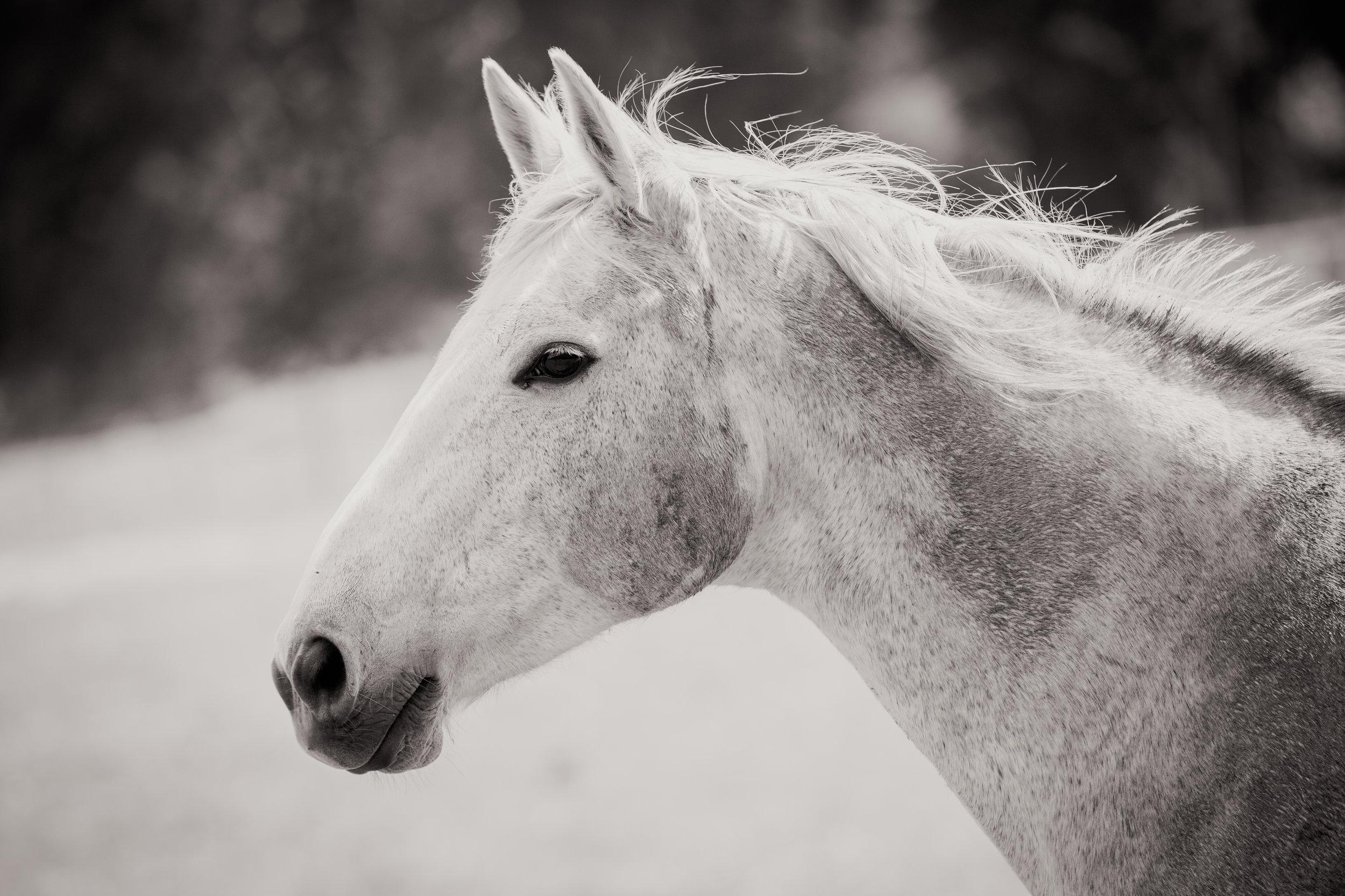 Horses - High Res-35.jpg