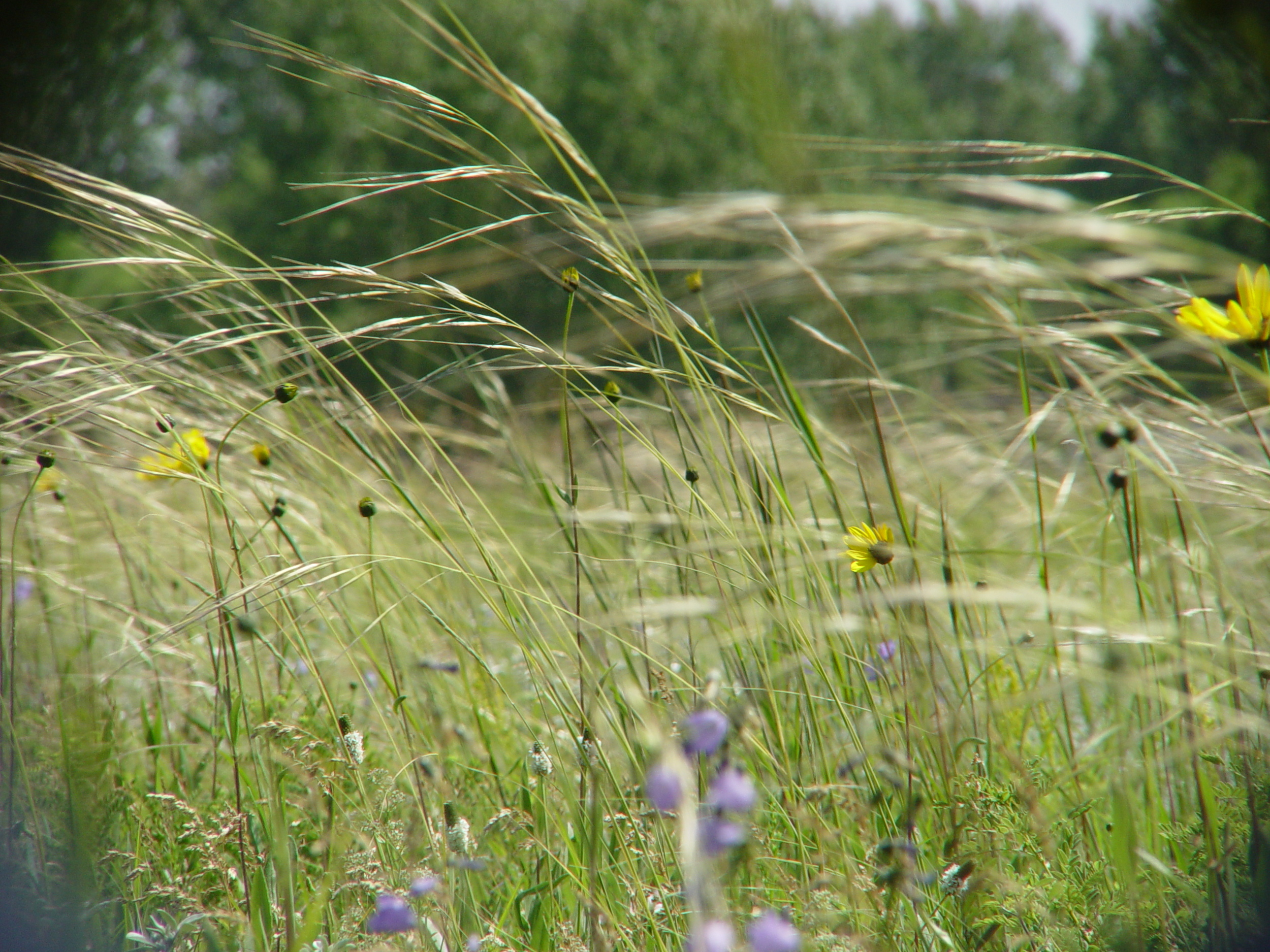 welcome to  THE TALL GRASS PRAIRIE    explore