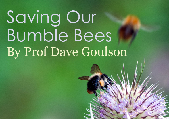 Saving Our Bumble Bees 2.jpg