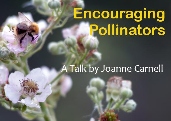 Bees on briar - Encouraging Pollinators