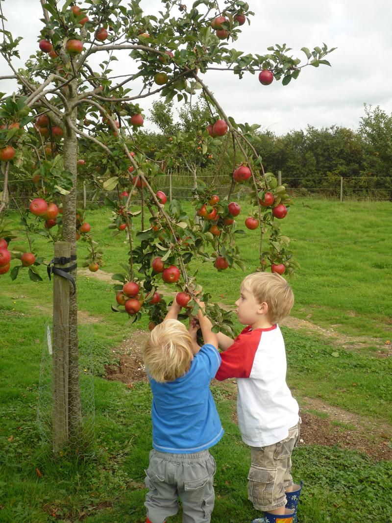 Children picking apples for web.jpg
