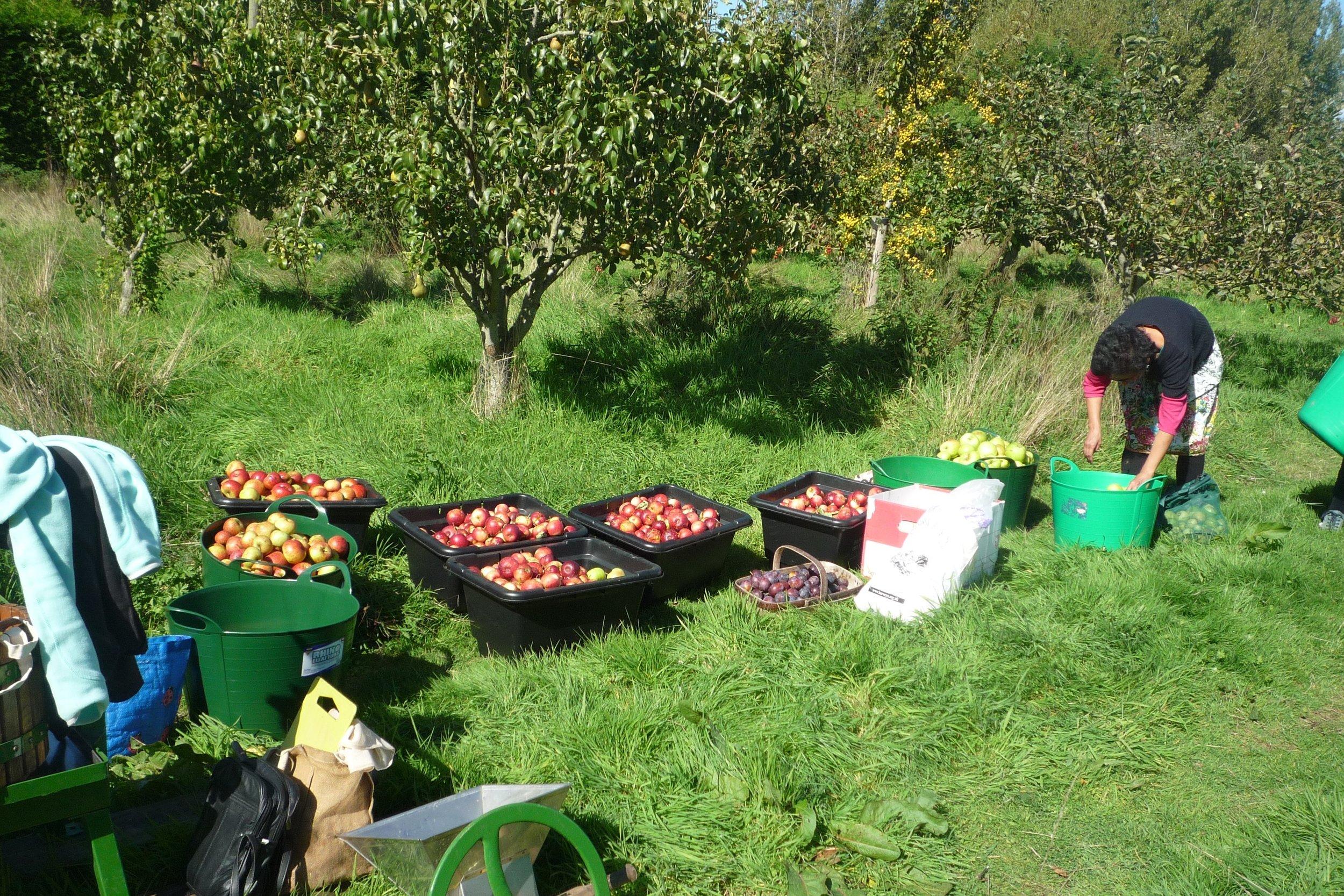 orchard-sept-2015.jpg