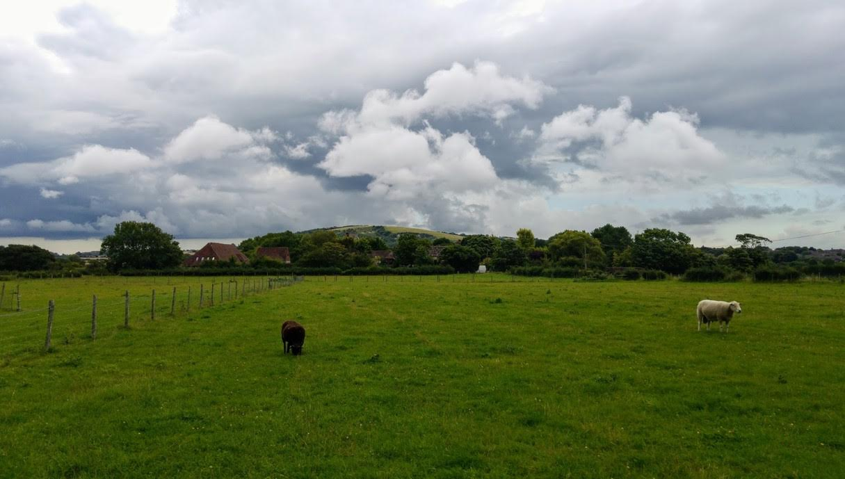 Rain clouds gather over Malling Hill as rams graze in the Ivors Lane field