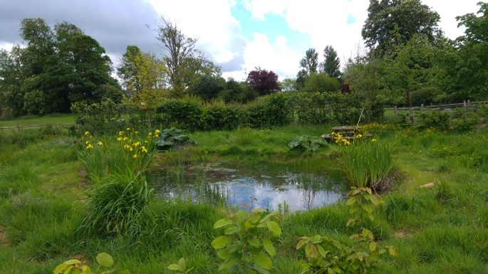 The pond at Baulcombes Barn now has newts which have found the pond themselves