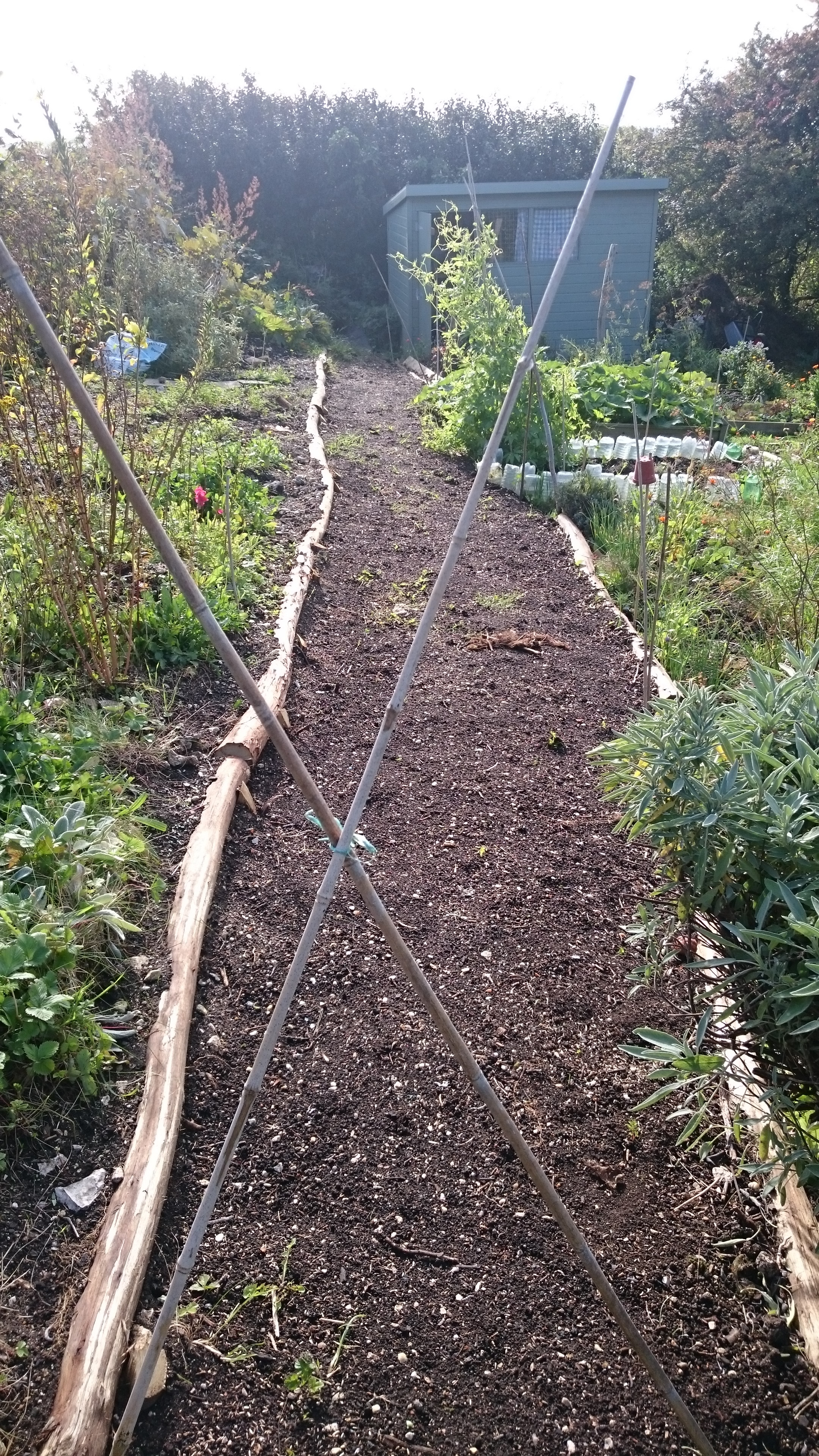 New path, with chestnut borders, seeded with grass