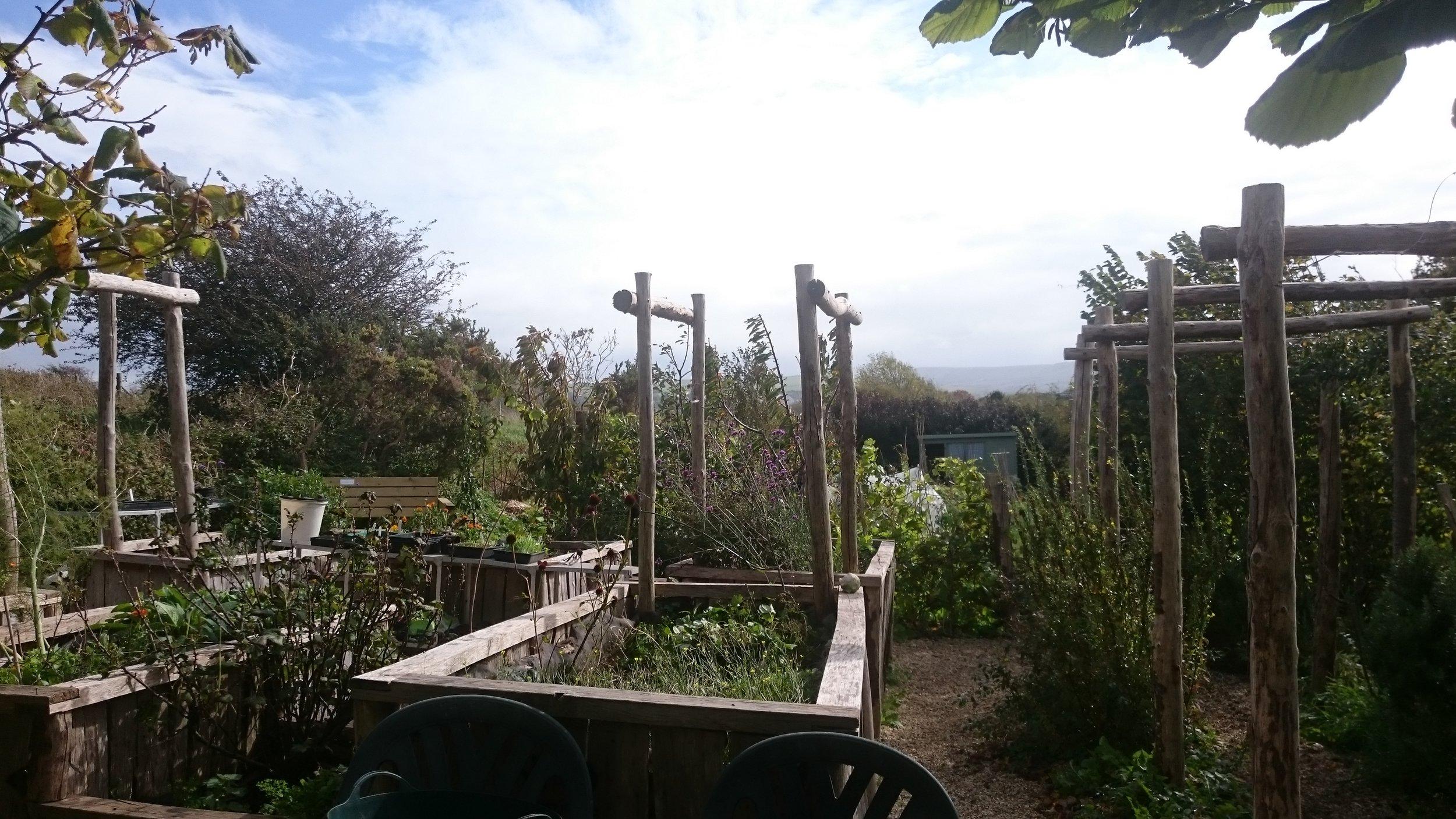 The allotment in autumn sun