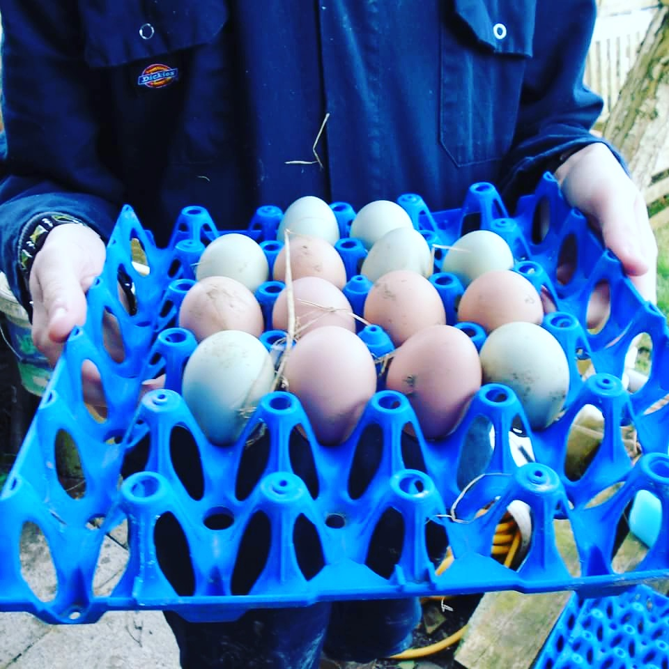 Fourteen eggs collected!