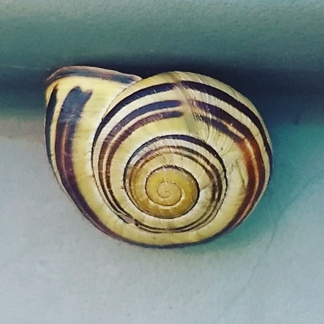Snail on the water butt