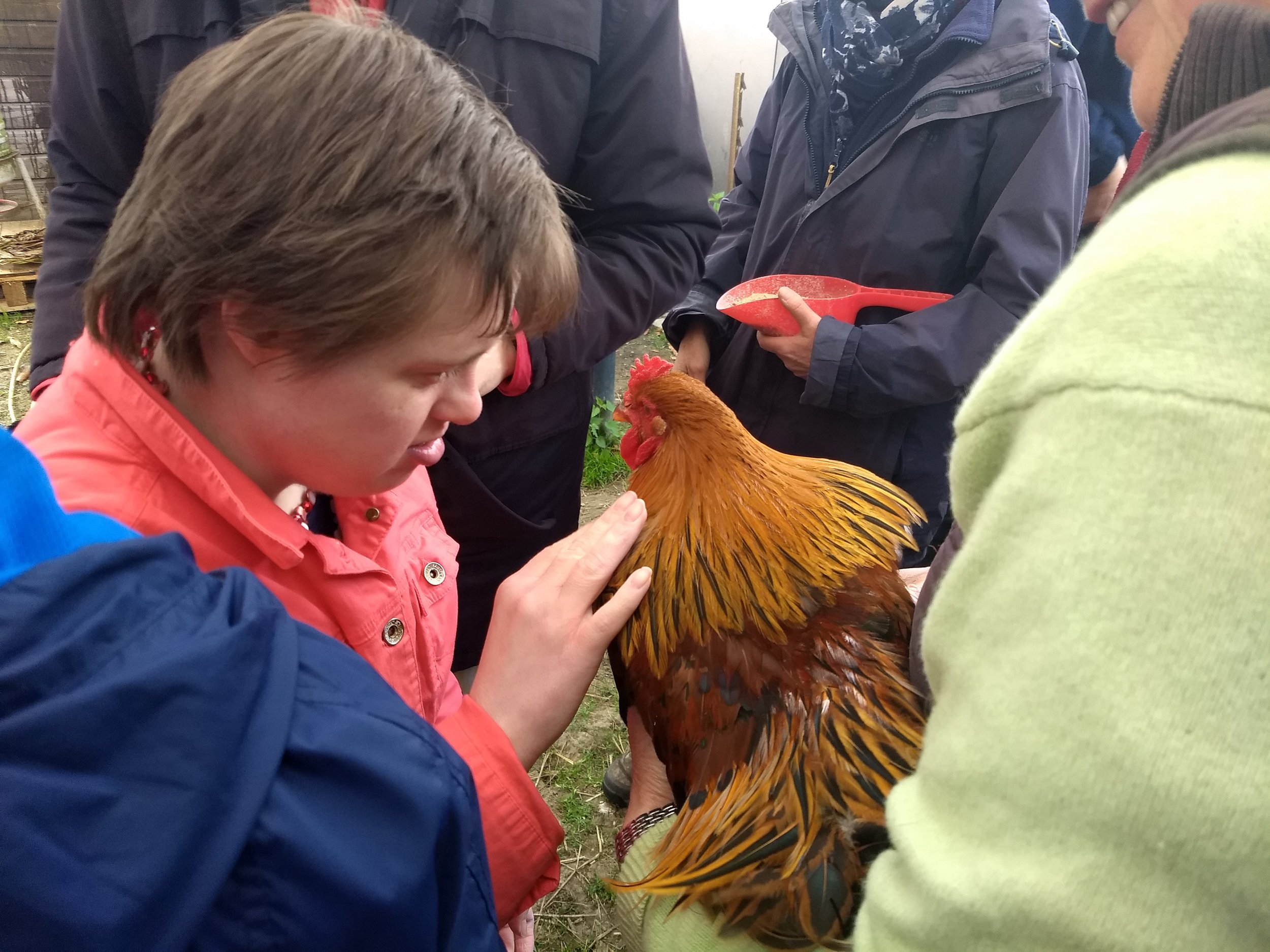 Saying hello to a hen