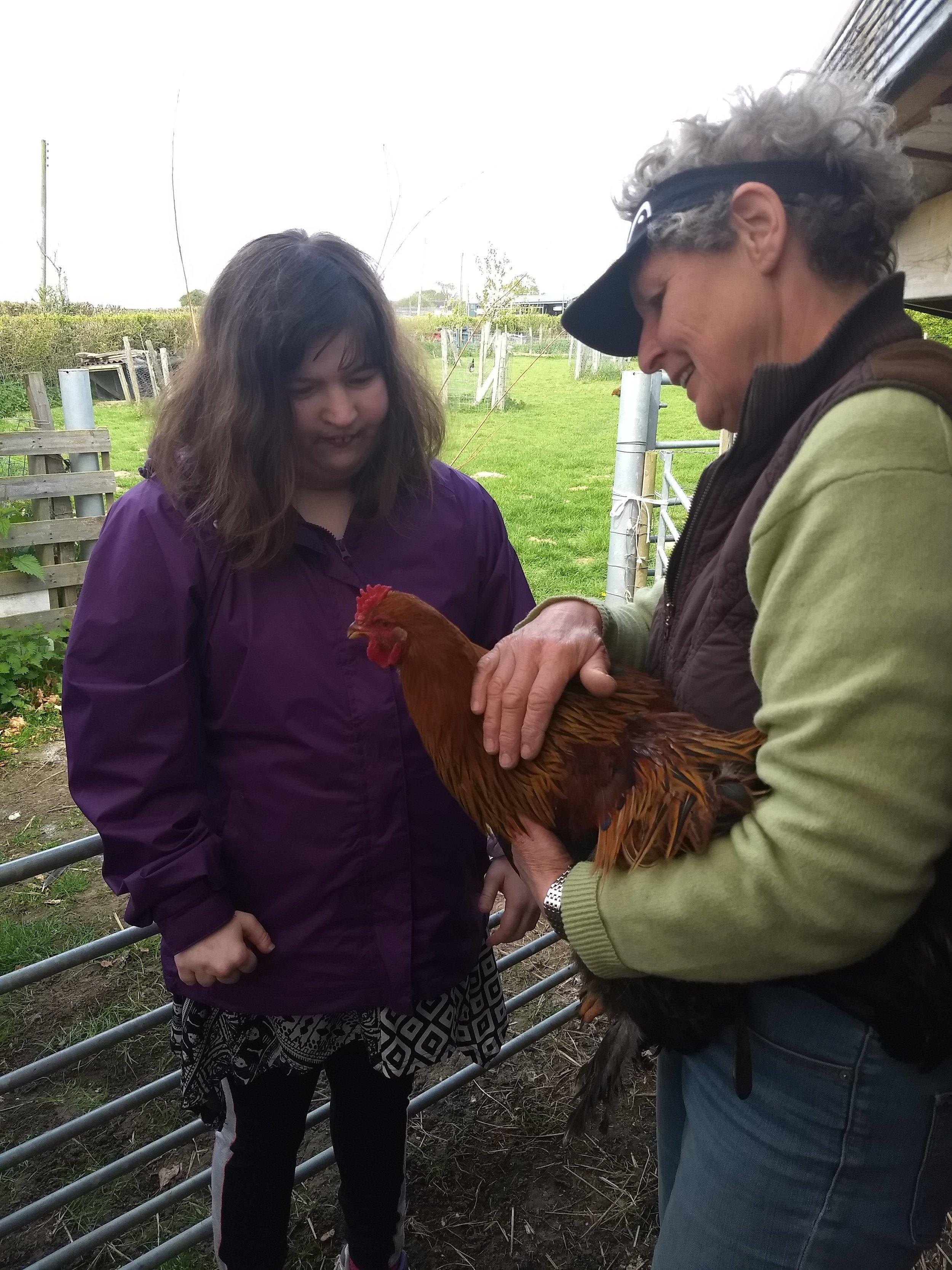 Stroking a hen